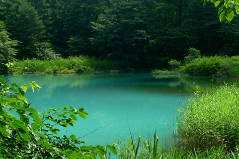 spring-goshiki1