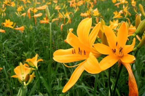 spring-niccou02